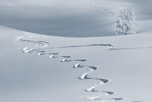 Sciare in Australia: le stazioni sciistiche più suggestive